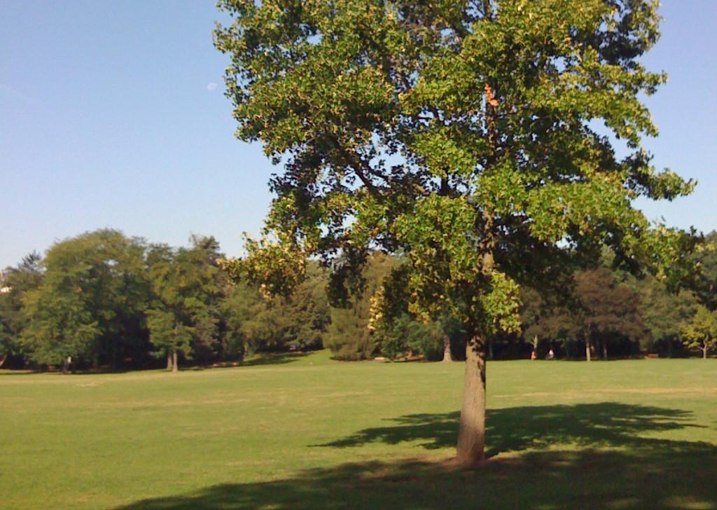 Ostpark in Frankfurt am Main