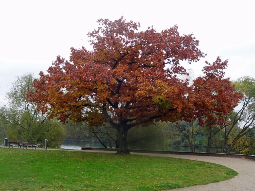 Fotos von Frankfurt am Main im Herbst
