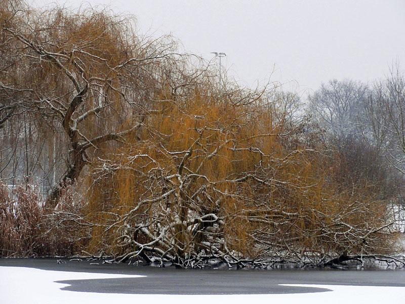 ostparkweiher-im-winter-1