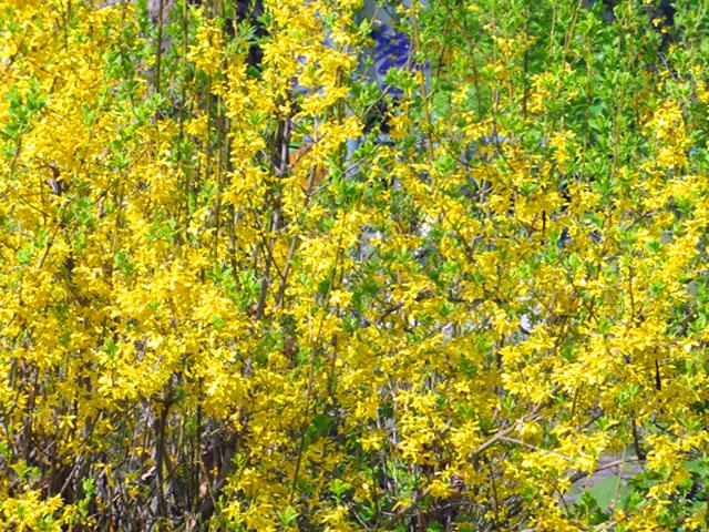 günthersburgpark-gelb