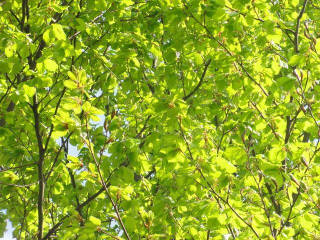 günthesburgpark-grün