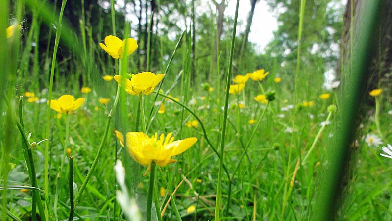 wir-lagen-träumend-im-gras