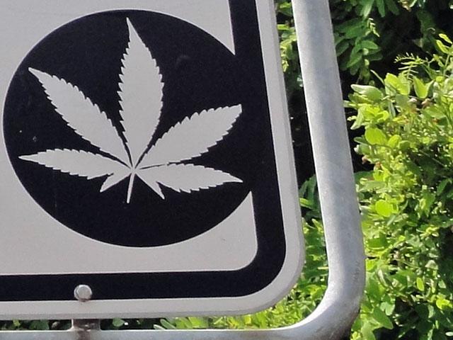 cannabis-für-ampel