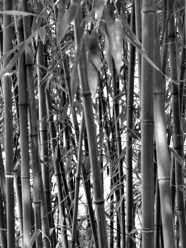 chinesischer-garten-frankfurt-berger-straße-foto-09