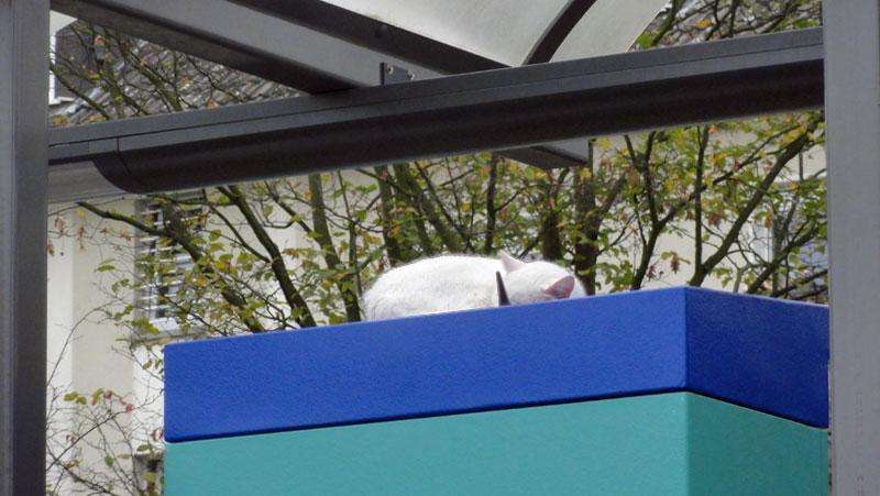Katze in Niederursel macht Nickerchen an der Haltestelle