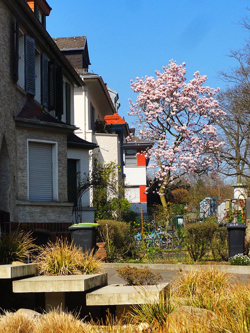 Bilder der Stadt - 04/2015 - Fotos aus Frankfurt am Main