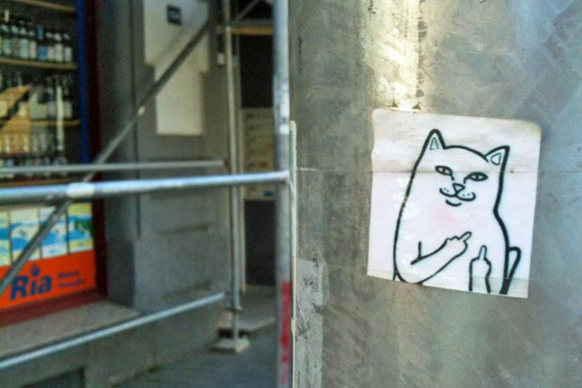 CAT FUCK OFF