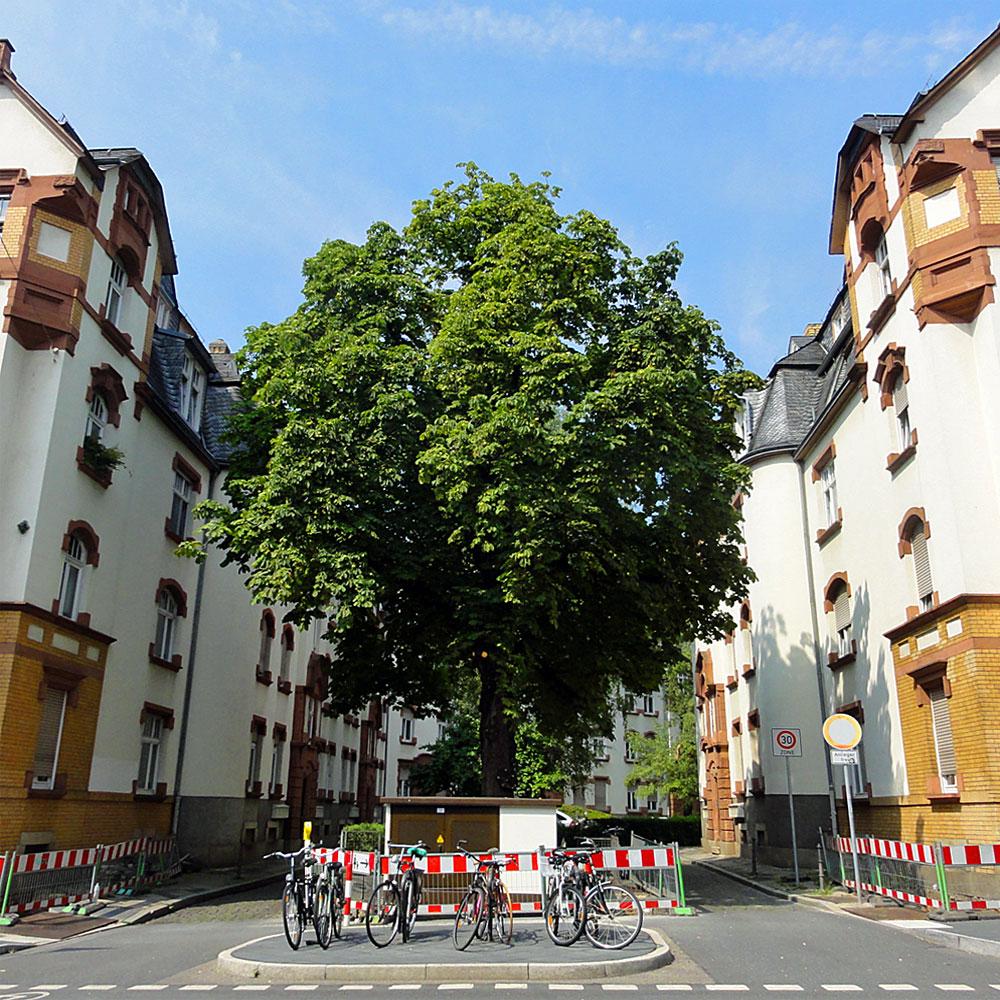 Häuschen, Baum und Bikes in Bornheim