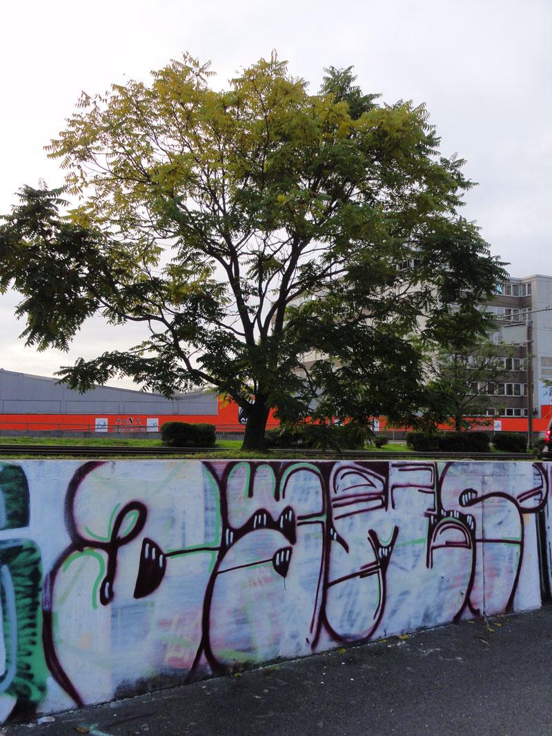 dams-graffiti-hall-of-fame-frankfurt