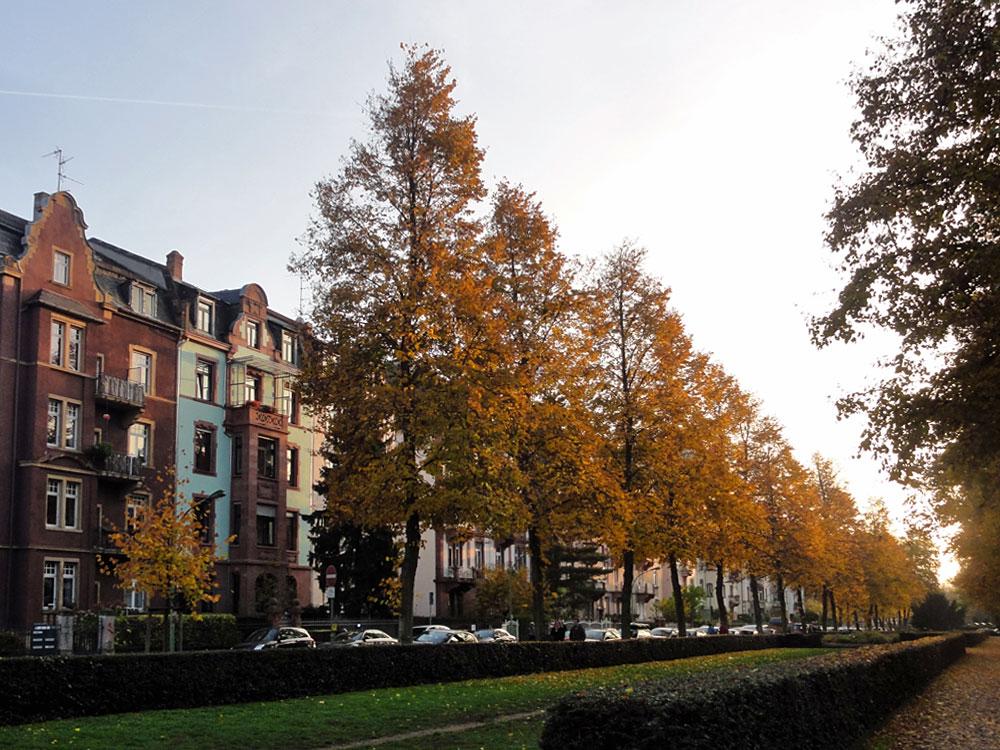 Günthersburgalle in Frankfurt Nordend im Herbst