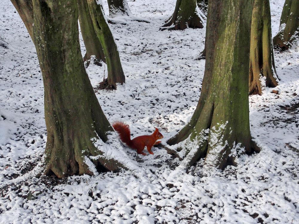 Schnee in Frankfurt 2016 - Günthersburgpark