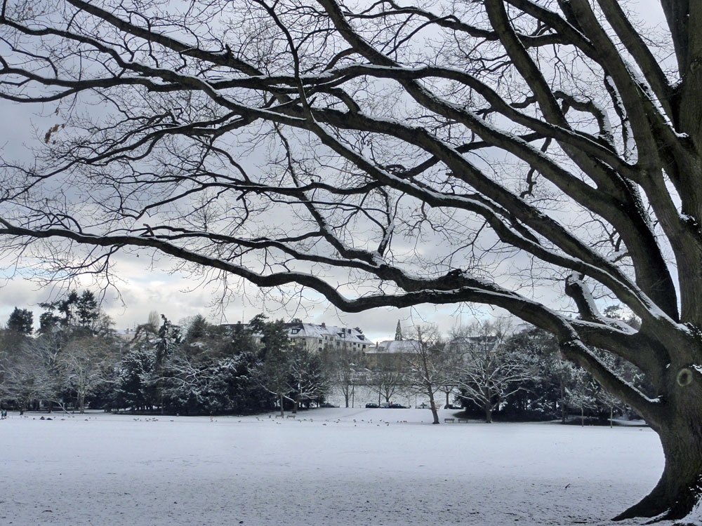 Schnee in Frankfurt 2016 - Ostpark