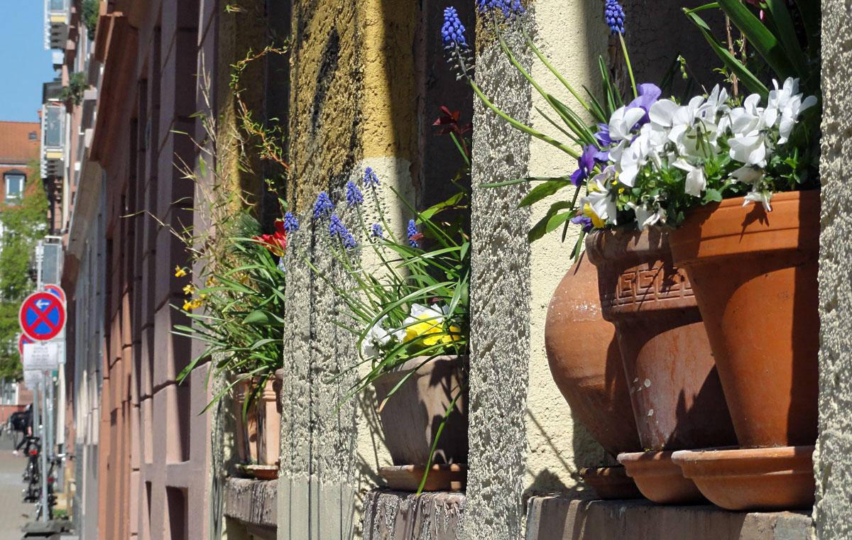 Blumentoepfe auf der Fensterbank im Nordend