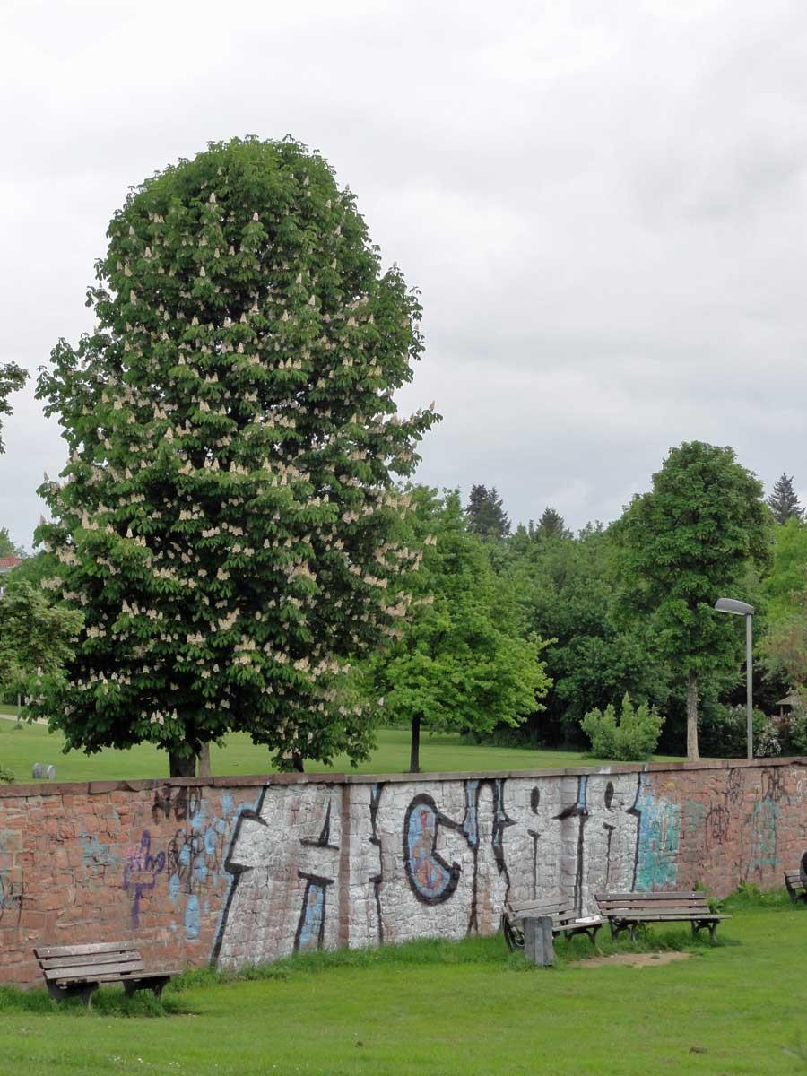 frankfurt-guenthersburgpark-graffiti-05