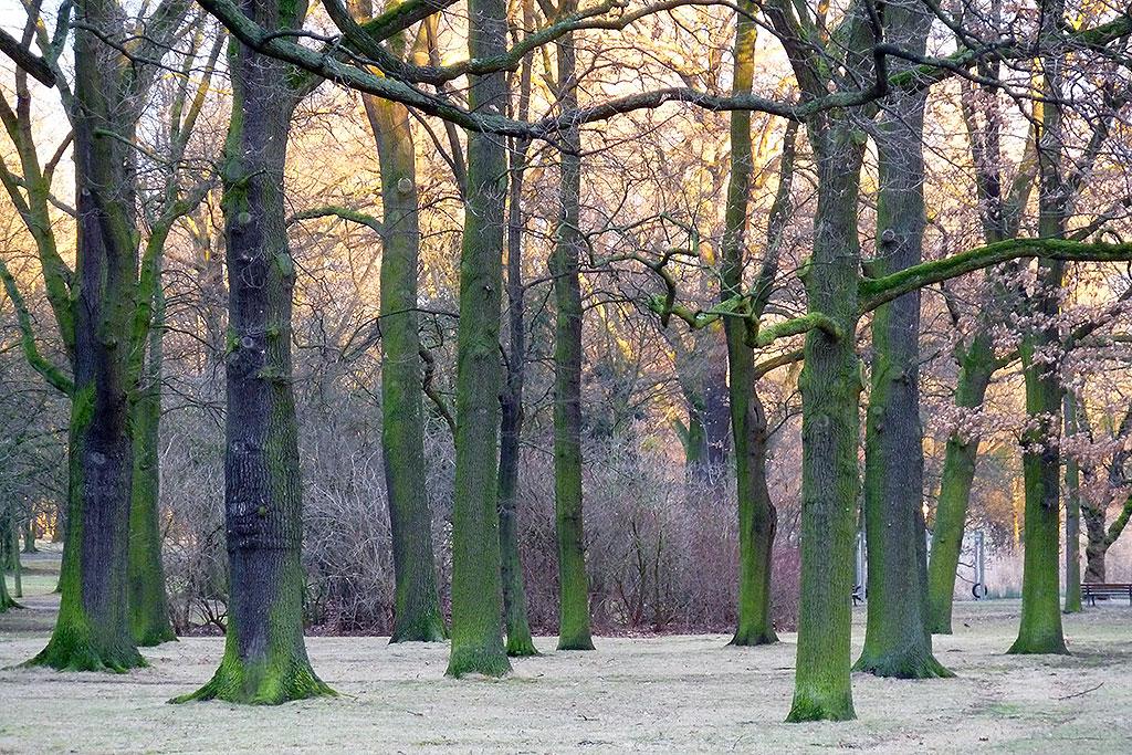 Bäume im Ostpark