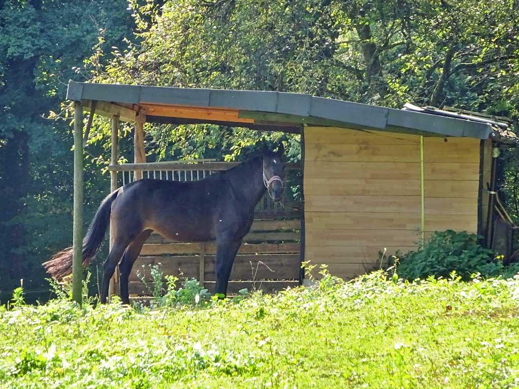 Pferdekoppel am Galgenberg in Frankfurt am Main.