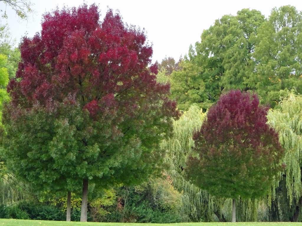 Rot-grünes Laub im Ostpark.