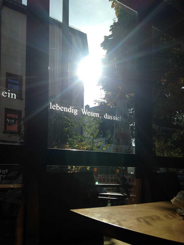 Gingko in Frankfurt am Main