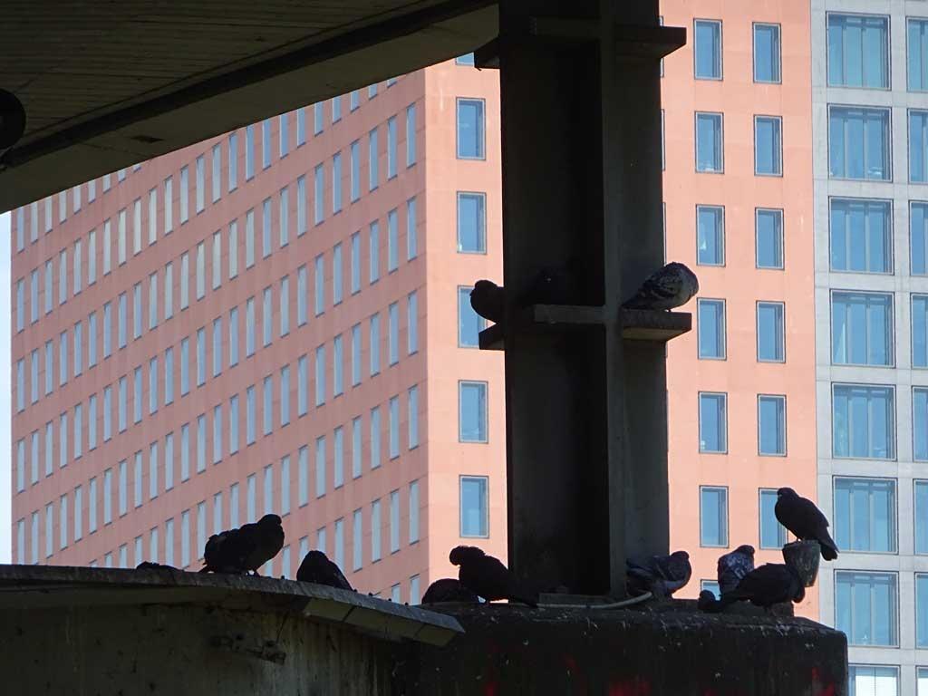 Tauben an der Brücke
