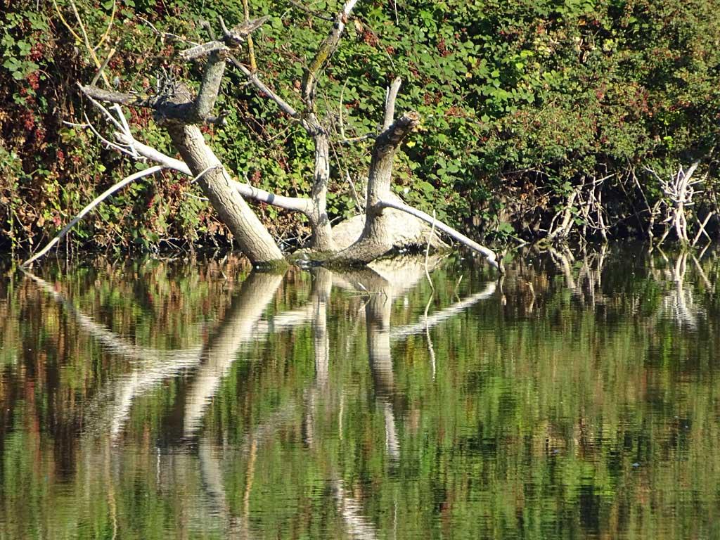 Wasseroberflaechenspiegelung im Ostpark