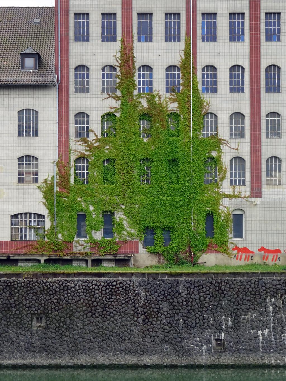 Fassadenbegrünung im Frankfurter Osthafen