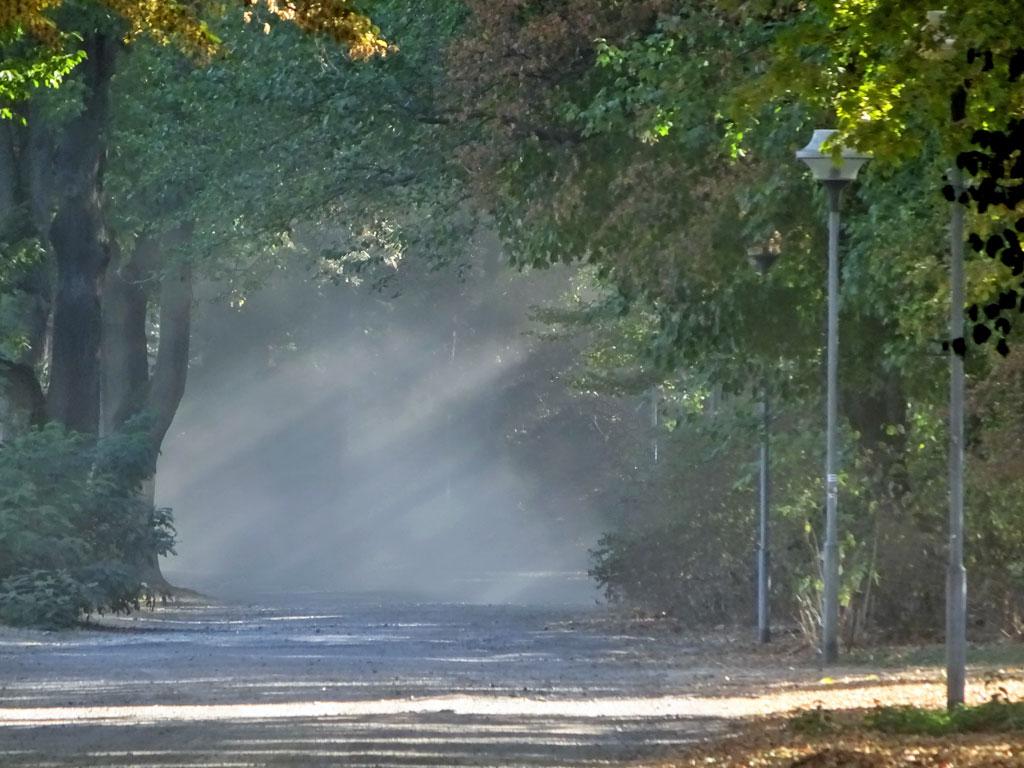 Sonnenstrahlen im Ostpark