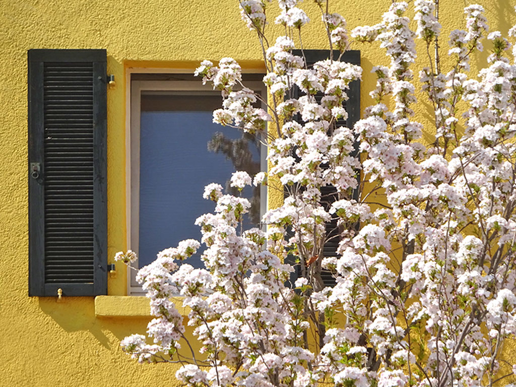 Frühlingsblüten in Frankfurt am Main