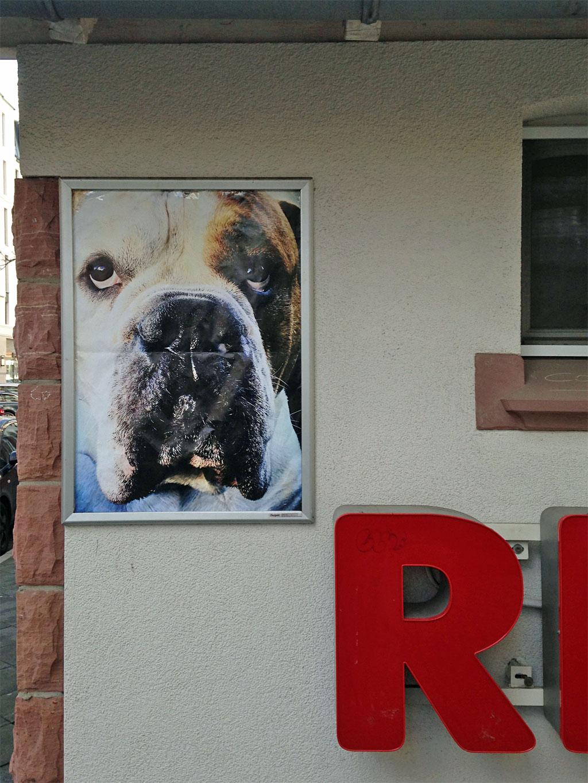 Gerahmtes Plakat mit Hund in Frankfurt