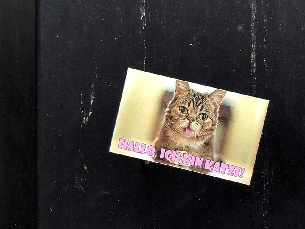 Hallo ich bin Katzi