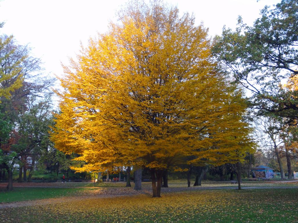 Fotos vom Herbst in Frankfurt