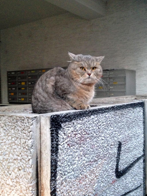 Katze in der Wiesenstraße