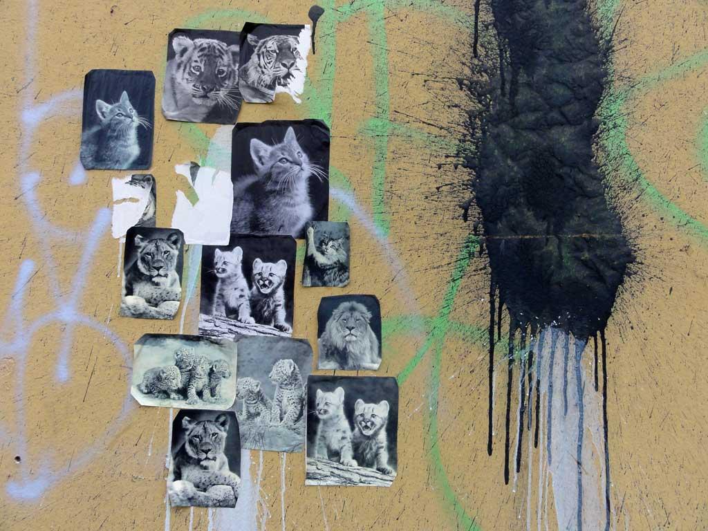 Karten, Tiger und Löwenbilder