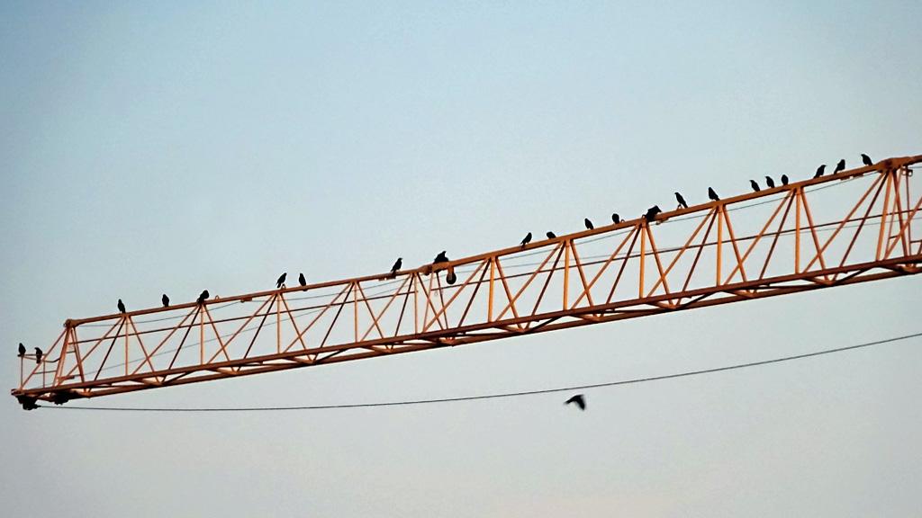Vögel auf einem Kranmast