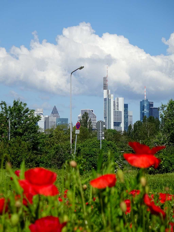 Stadtbilder Frankfurt - Mohnfeld mit Skyline im Hintergrund
