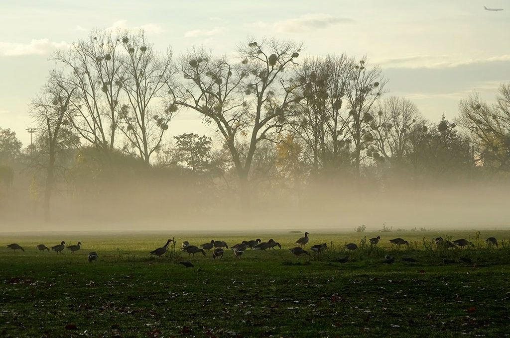 Nebelschwaden im Ostpark in Frankfurt