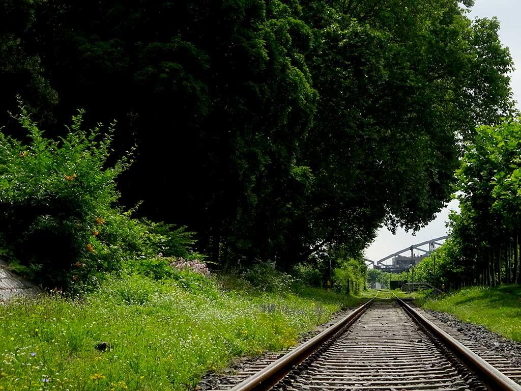 Schienen am östlichen Mainufer