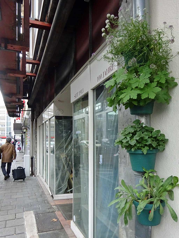 Pflanzentöpfe in den Straßen Offenbachs