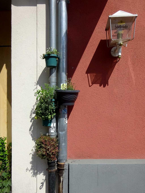 Urban Gardening in der Bieberer Straße