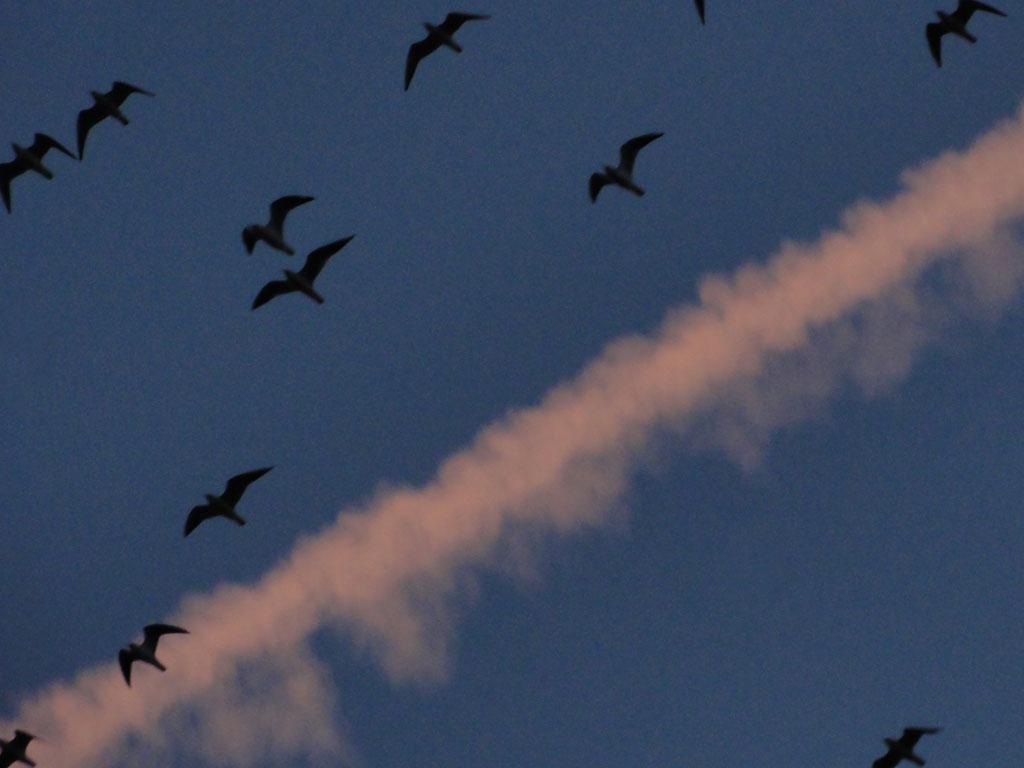 Vögel und Kondensstreifen am Himmel