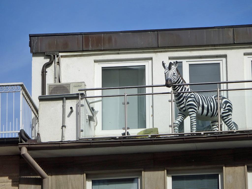 Zebra auf Balkon in Frankfurter Innenstadt