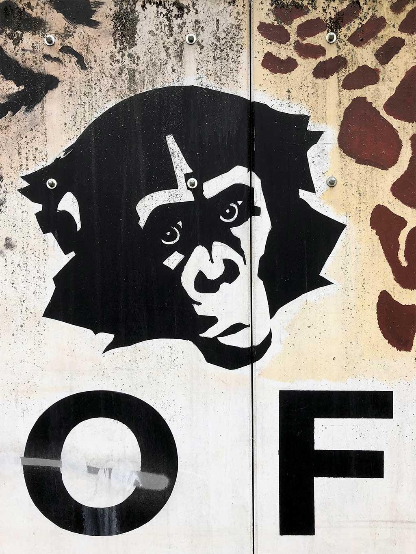 Zoo-Frankfurt-Wandbild mit Affengesicht