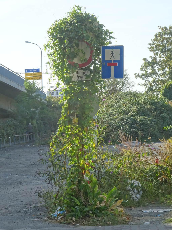 Zugewuchertes Verkehrsschild in Offenbach